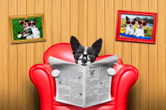 stock-photo-61413726-dog-reading-newspaper
