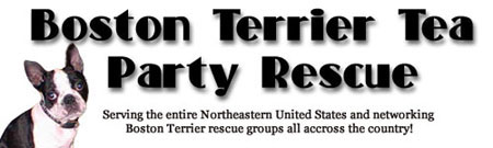 Thanks Boston Terrier Tea Party Rescue