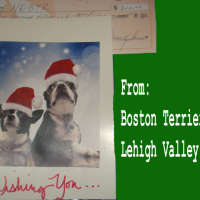 Thanks to Lehigh Valley Boston Terrier