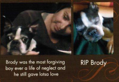 In Memory of Brody